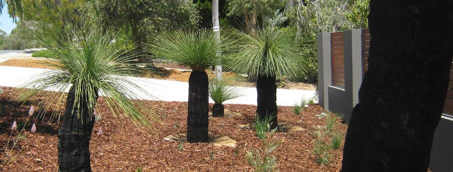 Galleries grasstrees australia - Front garden ideas western australia ...