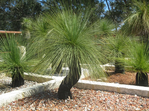 grasstree display2