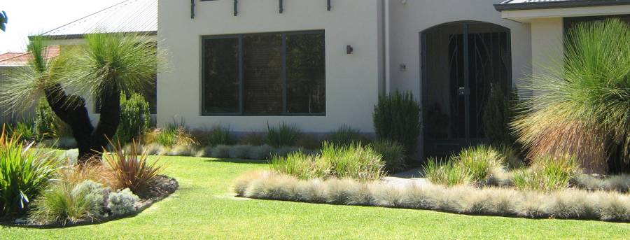 grasstrees australia
